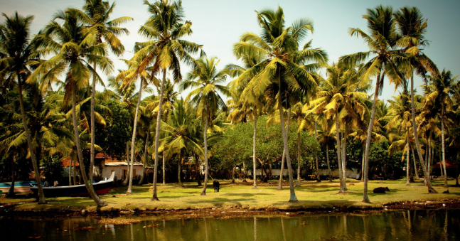 Top Five Things to See and Do in Kerala