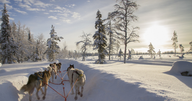 What to Expect on Our Lapland Husky Sledding Adventure!